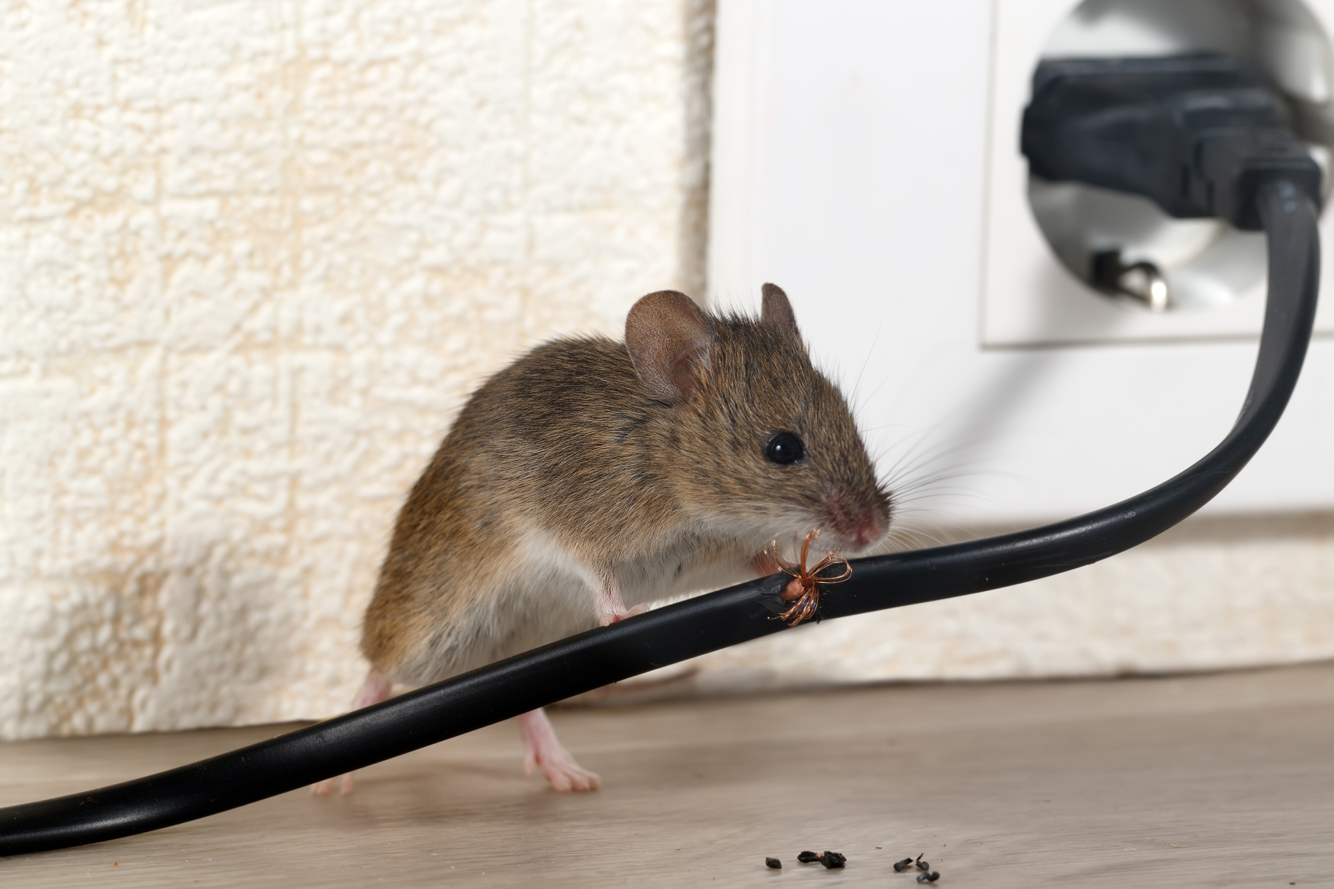 Mice Infestation, Pest Control in Camden Town, NW1. Call Now 020 8166 9746